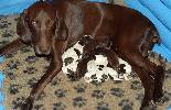 "Donau Wirbeln ""H"" Litter - 1 day old"